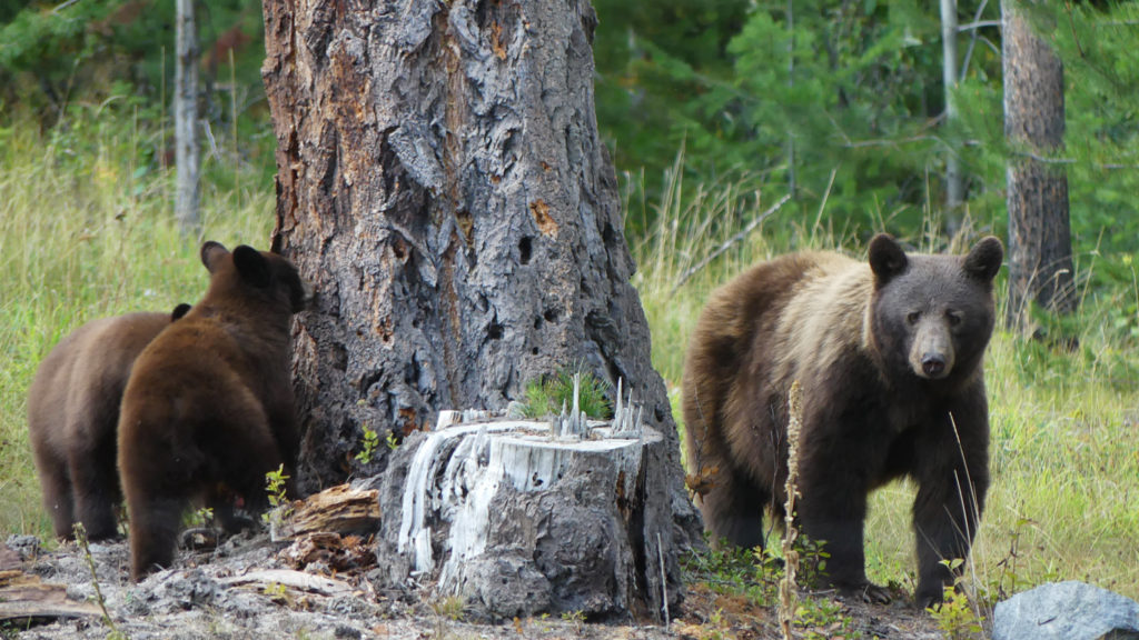 What is the Wilderness Stewardship Foundation
