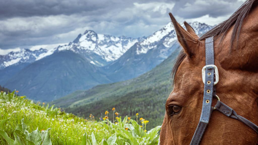 Horse in Flower Meadow