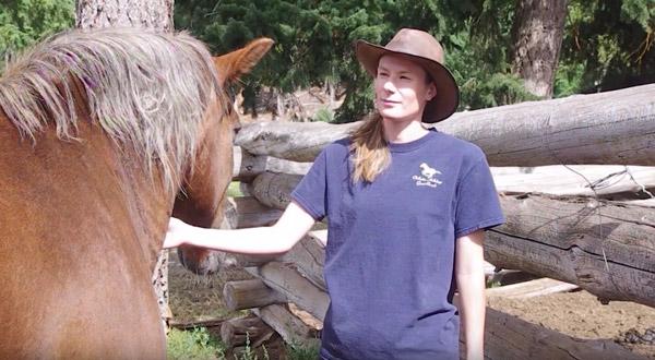 Horses as a teacher