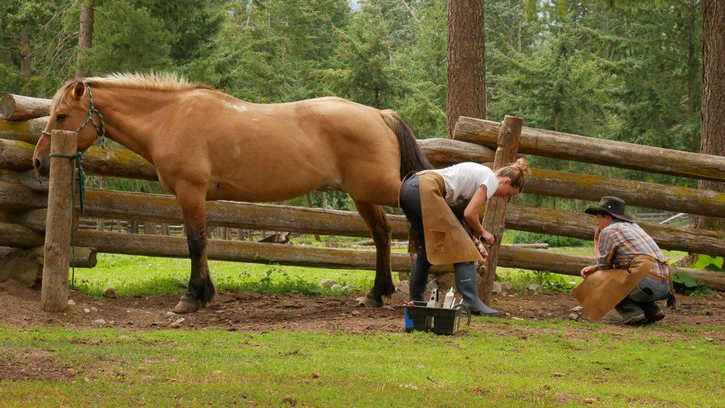 Lydia shoeing horses